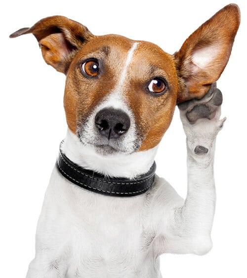 koiran koulutus